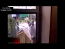 Кот кричит аллах акбар! DownloadfromYOUTUBE.top.mp4