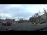 Поединок аистов посреди улицы в Минске
