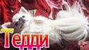 Чихуахуа собака Приколы чихуашкой Тедди чихуахуа играет Teddy Chih Порода собак Chihuahua