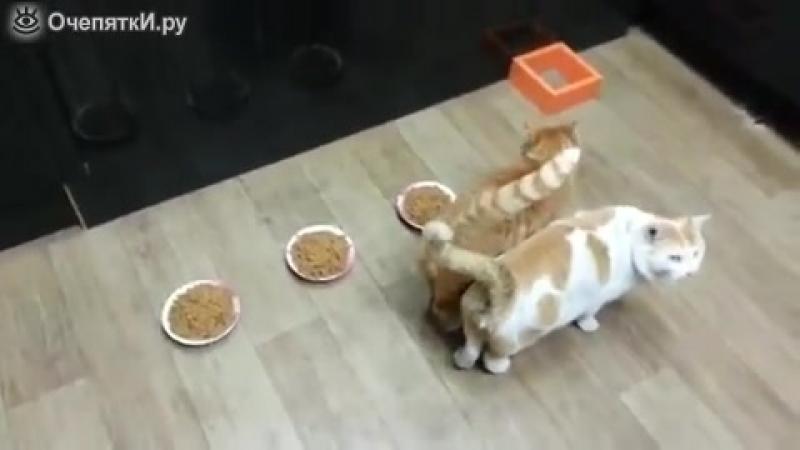 Кот оберегает приятелей от ожирения