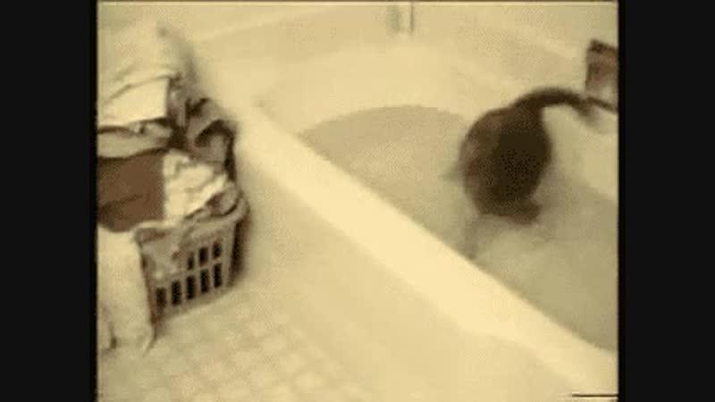 Cat bath tub fail