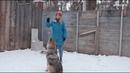 Диких животных превращают в киноактеров в королёвском Доме волка
