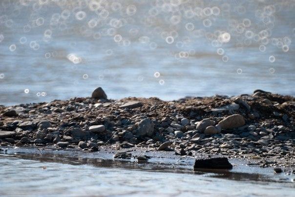 камни и боке