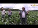 Успешный опыт применения бинарных посевов в системе NO till Посевы гибридов кукурузы