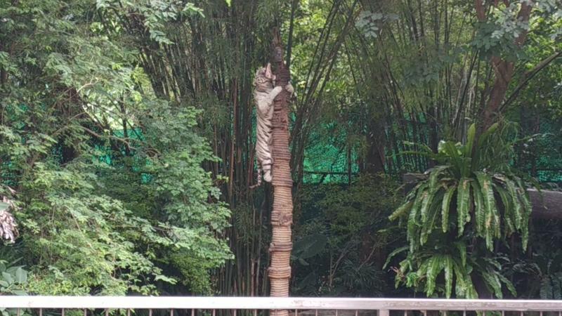 Шоу зверей в зоопарке Khao Kheow