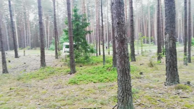 Kazalpin в Беловежской пуще