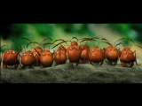 Букашки. Приключение в Долине муравьёв hd(Мультфильм)