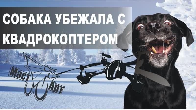 Собака украла квадрокоптер The dog stole the quadcopter