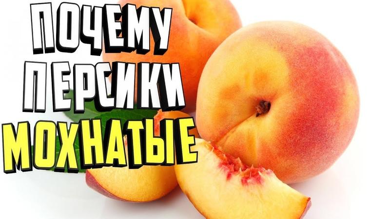 Почему персики мохнатые