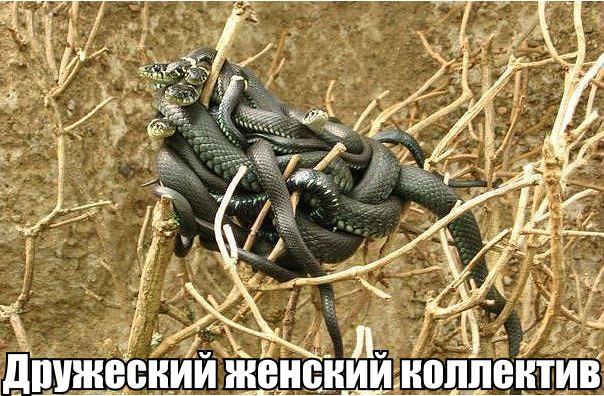 сдс, мизандрия, женский коллектив Женский коллектив