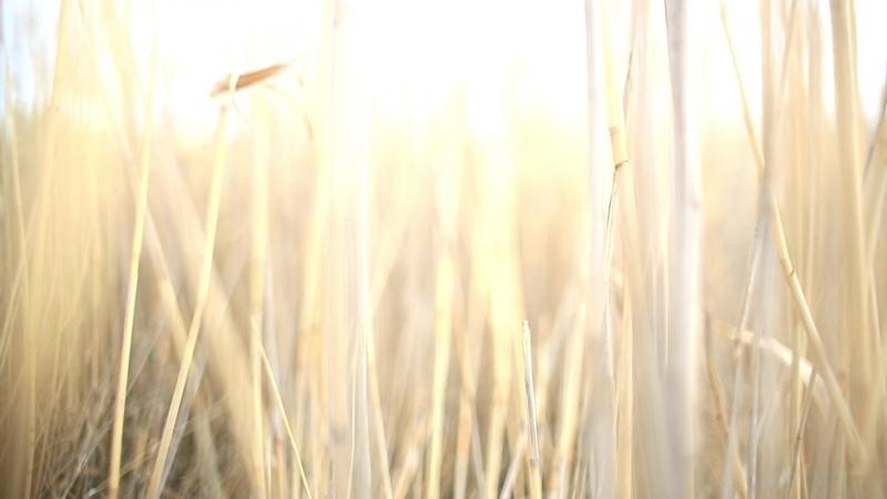 Мир как правда или иллюзия (худ. фильм, 2016) реж. Санджар Омаров