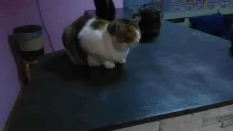 Котики скучают и ждут вас очень))