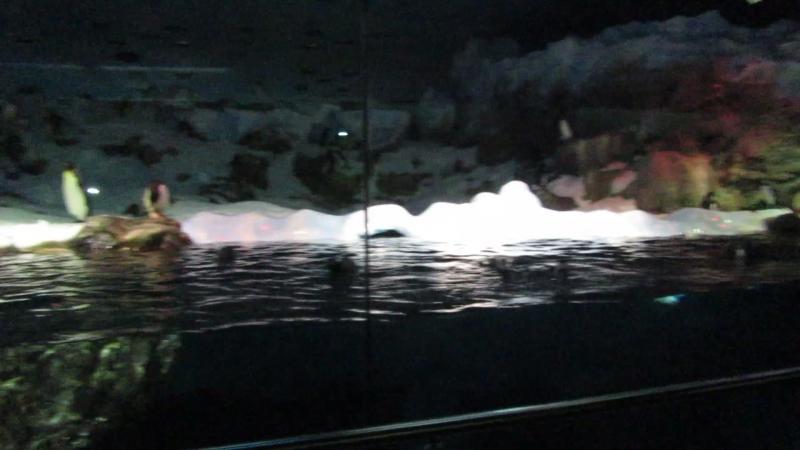 Лоро парк, пингвины