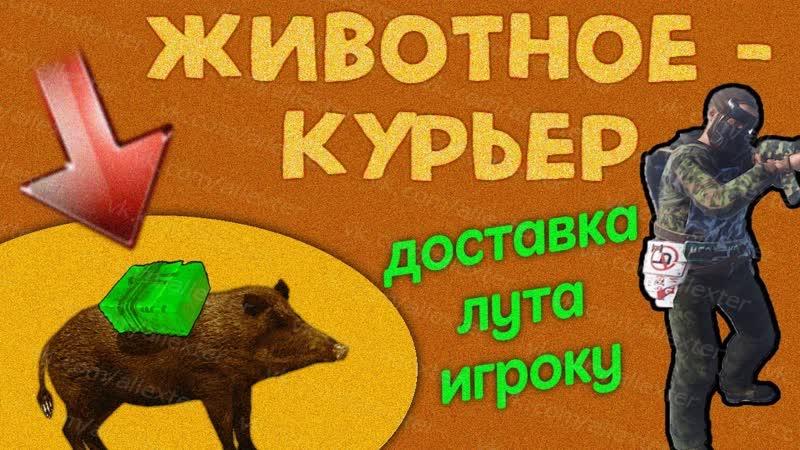 Животные-курьеры, доставка лута игроку - приватный плагин rust experimental