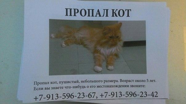 16 мая пропал кот по Юбилейному 4! Пожалуйста, если кто-нибудь его вид