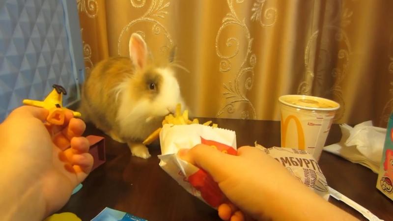 [А ну-ка Давай-ка] McDonalds и Кролик Баффи и Happy Meal ! ОБЫЧНАЯ ЕДА ПРОТИВ ОВОЩНОЙ ! ОБЗОР ХЕПИ МИЛЛА
