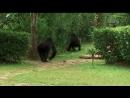 Animal Planet Большие и страшные 2 сезон 3 серия