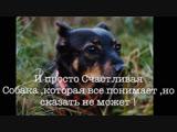 История Собаки ,которая начала жить заново в 10 лет!