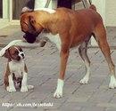 Собачник всегда разговаривает с собакой. Всегда. Даже с чужой. Если кратко, то: «Ня-ня-ня…