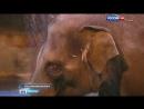 Вести Москва В Московском зоопарке открылся Музей слонов