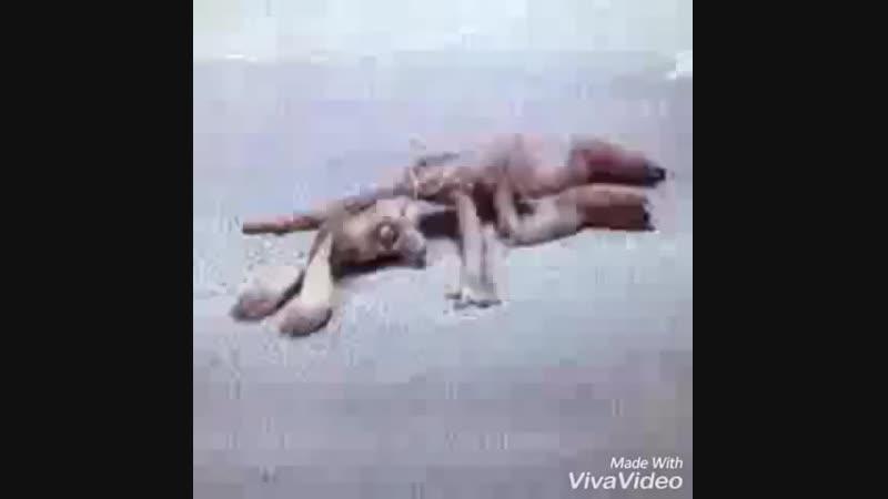 заяц погибает