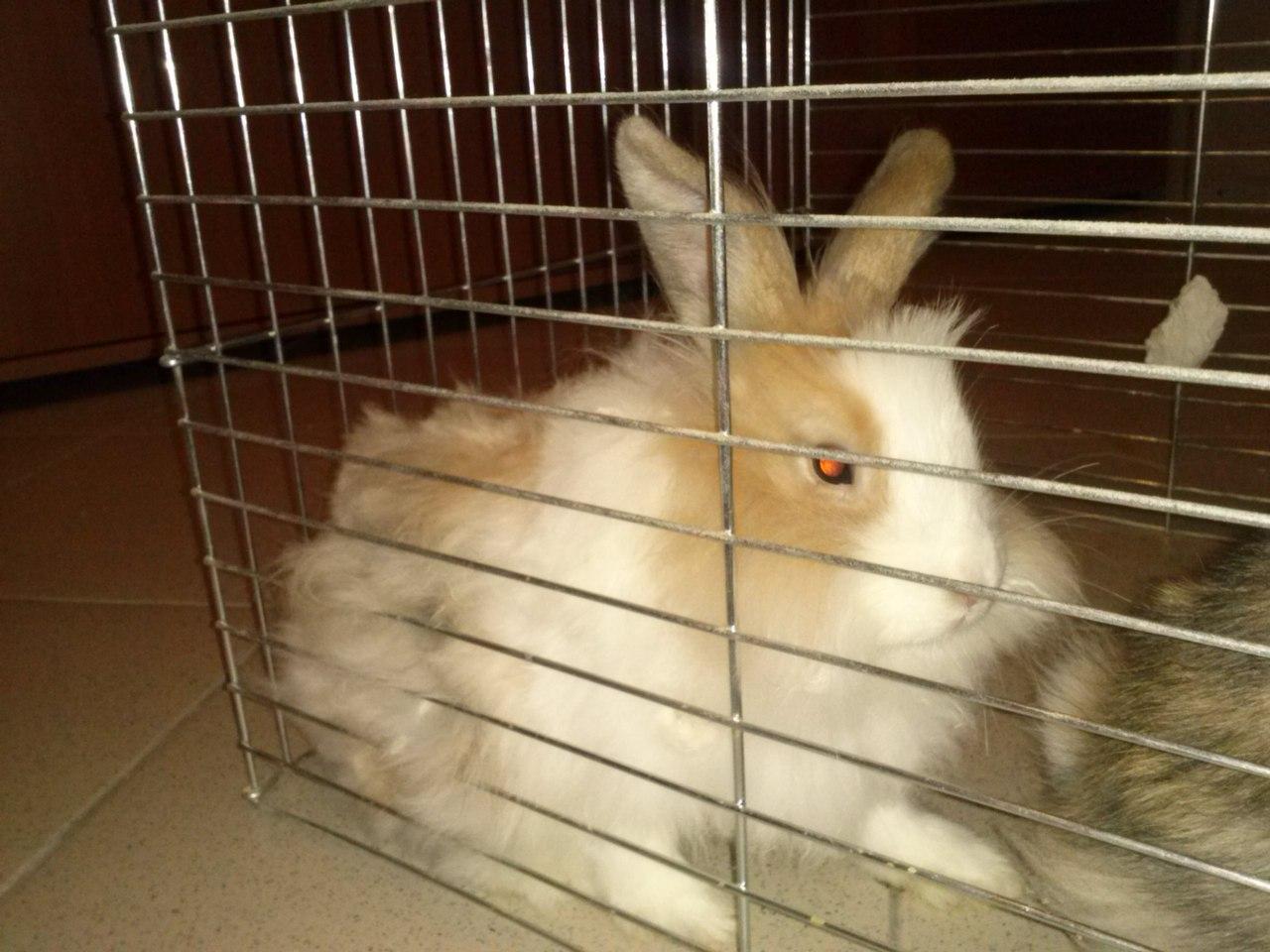 Декоративные кролики 29