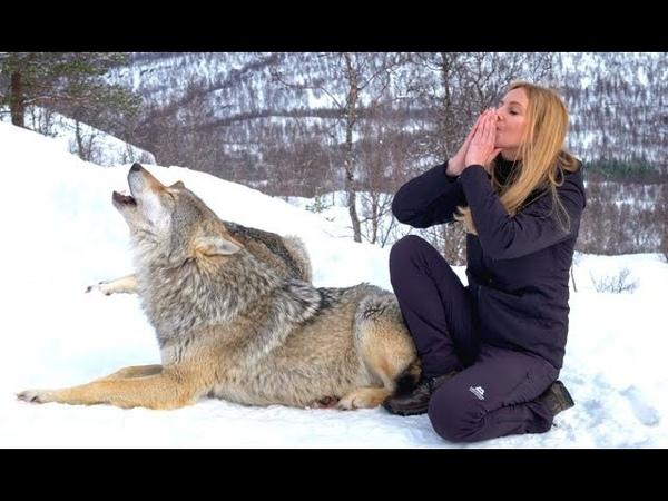 GIRL HOWLS WITH NORWEGIAN WOLVES - WOLF HOWL
