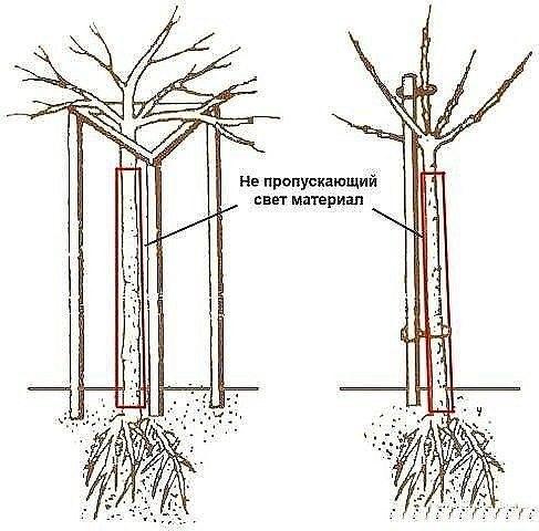 как крыжовник и смородину выращивать в штамбовой форме все чаще сейчас выращивают смородину и крыжовник не кустиками, а в штамбовой форме. а это, судя по откликам и некоторому личному опыту,