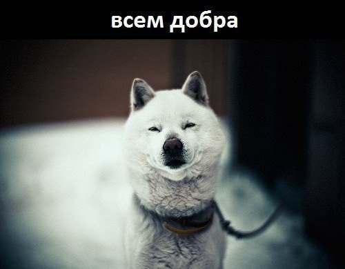 http://cs405127.userapi.com/v405127530/2a9f/1obTdXeFRuo.jpg