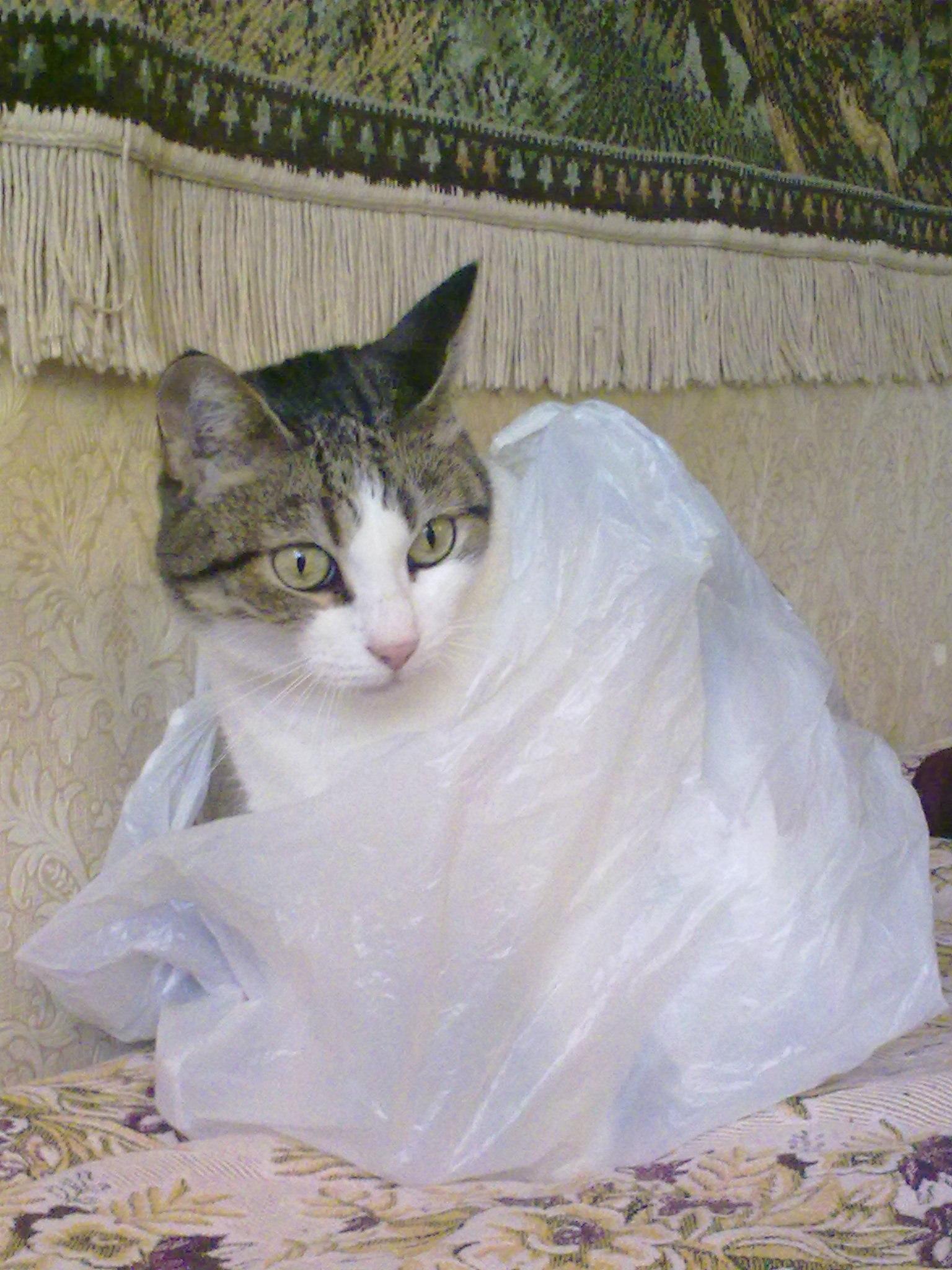 Почему кот лижет пакеты