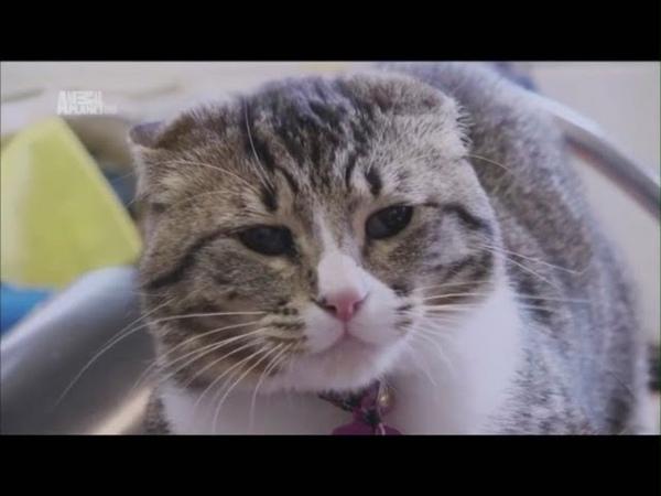 Моя адская кошка. Зена.