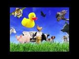 Как говорят животные. видео для детей.