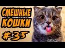 Смешные кошки и коты Приколы про кошек и котов 2017
