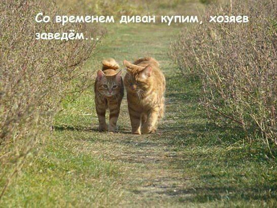 Россия продолжает рассмотрение вопроса передачи Сенцова и Кольченко в Украину, - минюст РФ - Цензор.НЕТ 4063