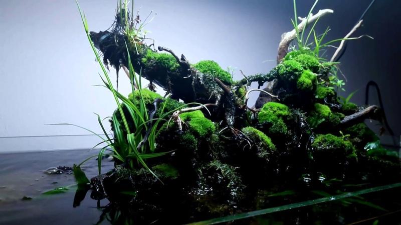 Aquarium.terrarium.paludarium.riparium.vivarium
