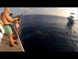 fishing shark акула рыбалка мальдивы экстрим