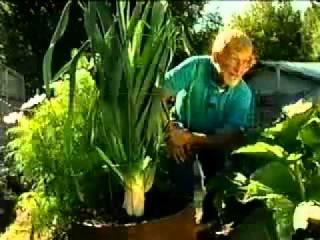 выращивание помидор в сибири видео
