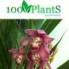 Интернет-магазин отличных растений 100plants.ru