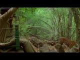 BBC: Жизнь животных - Плотоядные 2 серия Тигр. Смотреть онлайн - Видео - bigmir)net