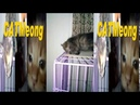 CATMeong Funny Kitty Family ❤️️ Кошка милая