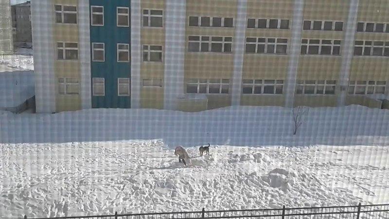 Собака напала на ребенка прямо на школьном дворе