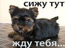 Фото Сони Зборовской №27