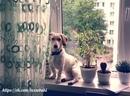 Характер собаки всегда в первую очередь зависет от человека, нежели от самой собаки.