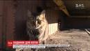 Мешканці багатоповерхівки побудували для котів будиночок за 19 тисяч гривень