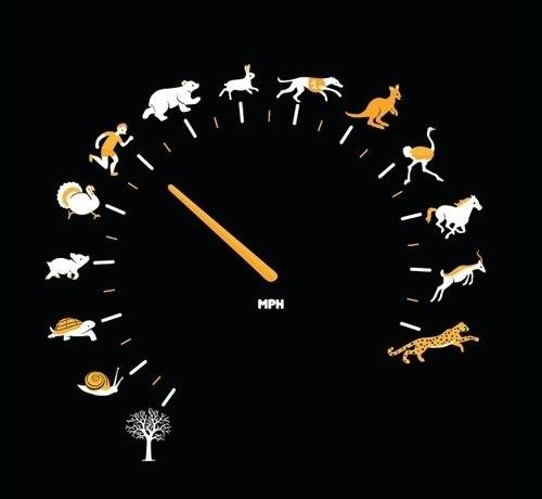 Обсуждение! Максимальная скорость!
