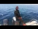 Нападение акулы,продолжение