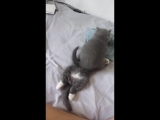 Котята.mp4