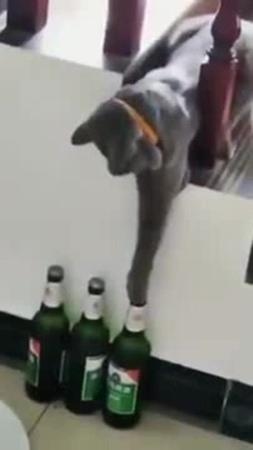 Кот алкоголик горе в семье