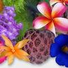 Мир Тропической Экзотики - комнатные растения