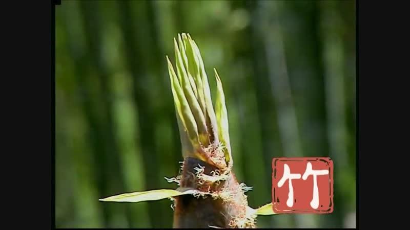 竹 zhú(Бамбук)